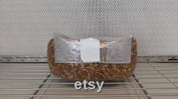 10 x 5lb Sterilized Oat Grain Mushroom Spawn Bags