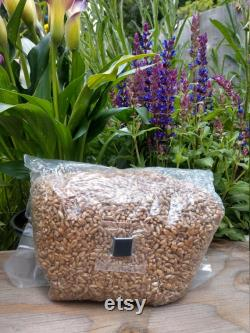 120lbs Sterilized (Rye, Oat or Wheat) Grain Bag with Injection Port (40 x 3lb bags)