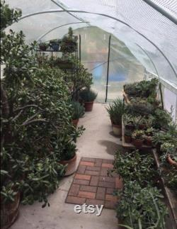 12 X 7 X 7 Portable Greenhouse Large Walk-in Green Garden Hot House