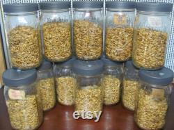 12x Mushroom Grain Spawn Jar PP5 Lid- O fungi U
