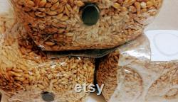 2lbs STERILIZED WHOLE OATS grain spawn bag