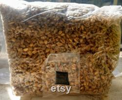 50 x 3lb Sterilized (Rye, Oat or Wheat) Grain Bag with Injection Port