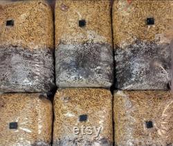 50x2LB Bulk Grow AIO Bags (with inoculation port)