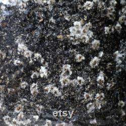 All-in-one Mushroom Grow Kit 1KG Grain Manure Vermiculite