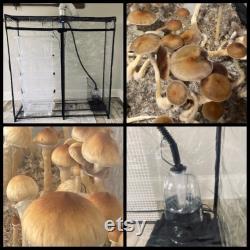 Automated Bulk Mushroom Growith MarthaTEK
