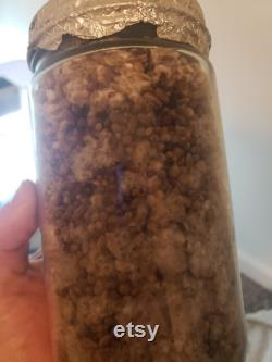Halloween Bakers dozen 13 White Millet MycoNuke mushroom Grain Spawn Quart Jars 32oz Sterilized Gypsum NEW Coffee SWIRL