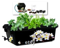 Hydroponic garden kit, 19 pieces. BPA-free air pump, air stone, mesh pots, spigot, pebbles,plugs, organic nutrients, organic seeds and more.
