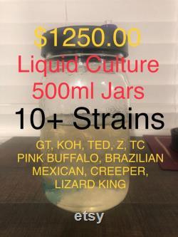 Liquid Culture 500ML Jars