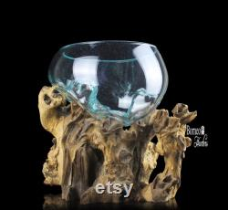 Molten Glass On Driftwood Base 10x11.2x10.2 Hand Blown Glass Fish Bowl Eco Planter Indoor Unique Natural Art Sculptural Terrarium
