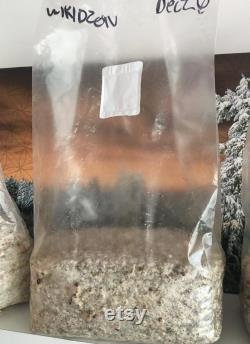 WZ All in One Grow Bag 100 Colonized ready to fruit